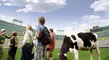 """Sacred Pastures"" Lambeau Field Tour"